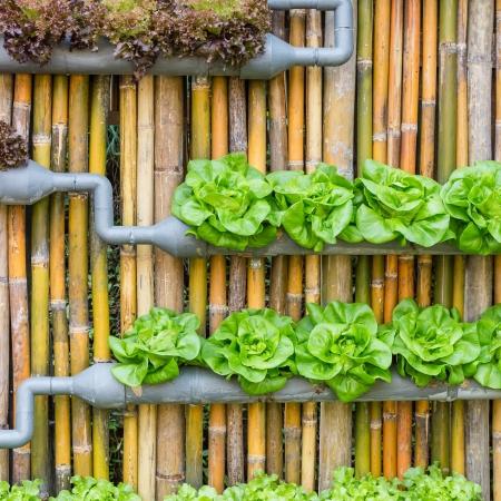 Aprenda como montar uma horta vertical em alguns passos